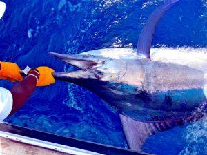 kenya-big-game-fishing Big-game-Kenya